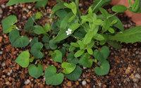 Flowerwithviolet
