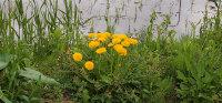 Flower02d