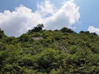 Sakurakonatsugumo