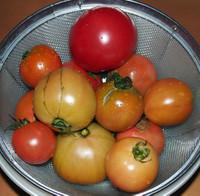 _tomate2